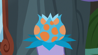 Close-up on poisonous flower in villager's hoof S7E20
