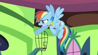 "Rainbow Dash ""he did that on purpose!"" S03E10"