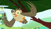 Owlowiscious flying S4E18