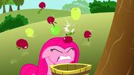 S03E13 Pinkie dostaje jabłkami po głowie
