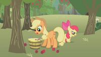 Applejack picking up apples S1E12