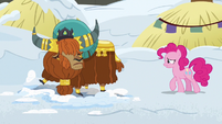 Pinkie Pie approaching Prince Rutherford S7E11