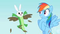Rainbow Dash sees the bunny, owl and crocodile hybrid S2E07