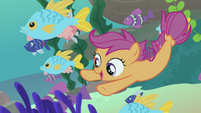 Scootaloo swimming with schools of fish S8E6