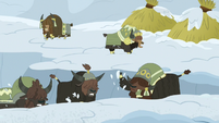 Yaks dig a trench through the snow S7E11