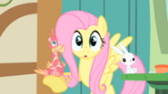201px-Fluttershy with Philomena in the hoof S1E22