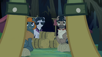 Caballeron and henchponies look at Daring Do S4E04