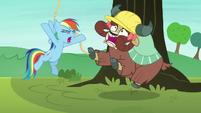 Rainbow Dash yelling at Yona S8E9