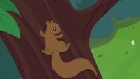 Squirrel climbing a tree CYOE14b