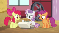 Sweetie Belle holding the heart-shaped pie S8E10
