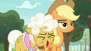 Goldie Delicious laughs at Applejack S9E10.png