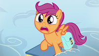 Scootaloo amazed by Bow Hothoof's shirt S7E7
