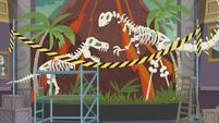 Museum display of dinosaur skeletons EGDS1