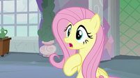 """Fluttershy """"I don't know how I keep winning"""" S8E9"""