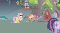 Fluttershy adorable S01E07
