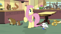 Fluttershy looks around at chaotic clinic S7E5