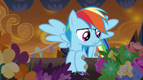Rainbow Dash searching the flower stand S9E2
