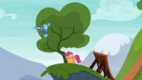 Rainbow Dash flies into another tree S6E7