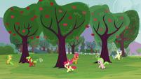 The fillies running around trees S3E08