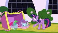 "Twilight ""where's Spike and Fluttershy?"" S9E4"