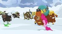 Pinkie Pie starts drilling through the snow S7E11