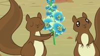 Squirrel presents the foal's-breath S8E23