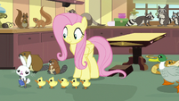 Ducklings chasing Angel Bunny S7E5