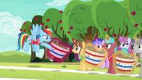Rainbow Dash addressing the unicorns S6E18