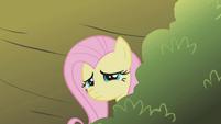 """Fluttershy """"it's so steep"""" S1E07"""