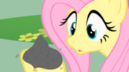 201px-Fluttershy holds Philomena's ashes S01E22