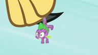 S08E11 Spike trzymany w szponach ptaka