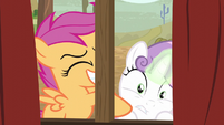 Scootaloo excitedly shaking Sweetie Belle S5E6