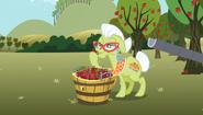 S02E15 Babcia Smith kontroluje jakość jabłek