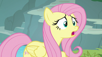 """Fluttershy """"what's the matter?"""" S8E4"""