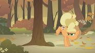 S01E13 Applejack kopie w drzewo