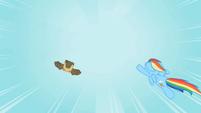 Rainbow Dash Owlowiscious 5 S02E07