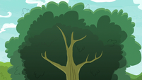 Apple tree with no apples in it S9E10
