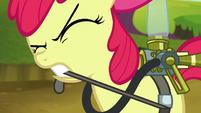 Apple Bloom straps on pest pony gear S5E4