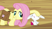 Fluttershy petting Angel S03E11.png