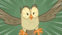 Owlowiscious hoots S4E23