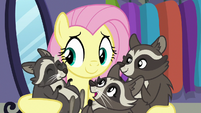 Raccoons chittering happily in Fluttershy's hooves S8E4