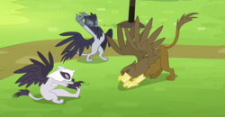 Griffons training.png