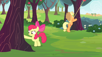 Apple Bloom touches a tree S4E17