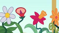 Potted flowers singing to Twilight Sparkle EGDS8