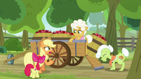 "AJ ""the Great Seedlin' is takin' our apples?"" S9E10"