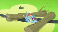 Rainbow Dash hurting herself while going between 2 logs S3E7