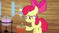 """Apple Bloom """"more or less"""" S4E15"""