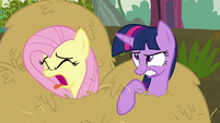 Twilight and Fluttershy covered in hay S5E23
