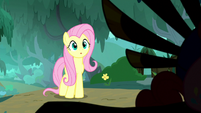 Fluttershy stops in front of something S8E18