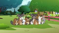 Fluttershy's animals S3E05